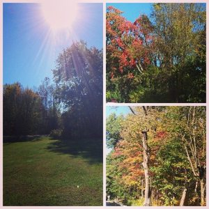Fall foliage upstate.